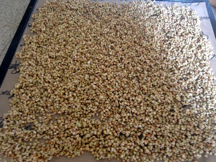 Sprouted Buckwheat on Tray